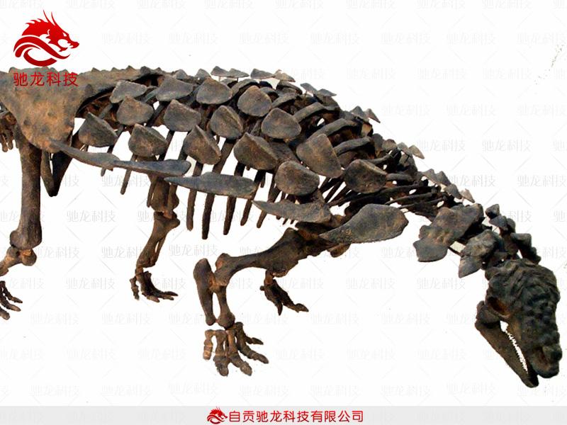 万年龟科技有限公�_恐龙骨架_结节龙科重怪龙化石_自贡驰龙科技有限公司